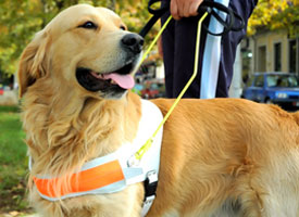 available-service-dogs